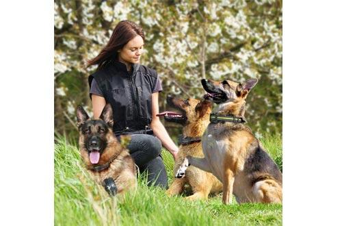 FunniPets Dog Training Collar