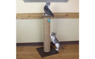 Kitty City Wide Premium Scratching Woven